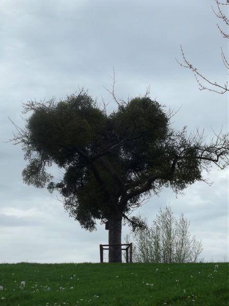 boom vol vogellijm